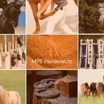 MPS Pferderecht - Verkehrsunfall mit Pferd - sicherer Weidezaun