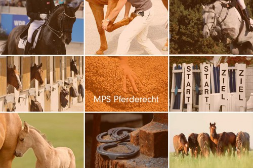 """MPS Pferderecht - Zur Frage, wann Pferde """"neu"""" oder """"gebraucht"""" sind"""