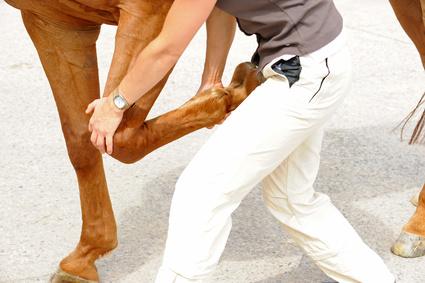 Gewährleistung beim Pferdekauf